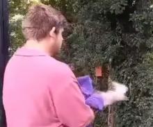 sperwer wordt vrijgelaten door vrijwilliger