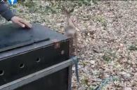 ree gevonden in veranda wordt vrijgelaten
